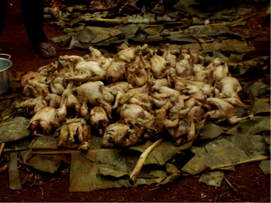 A pile of plucked chickens on a bed of leaves