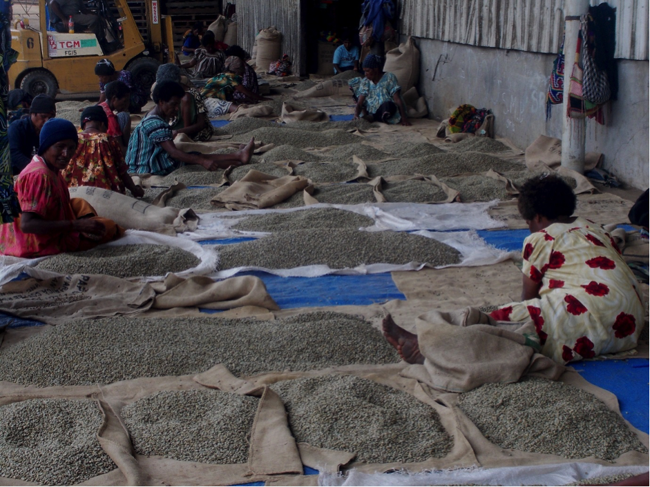 Piles of coffee beans on the ground laid out on hessian bags for sorting and processing