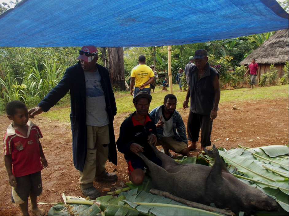 A group of men standing beside a butchered pig